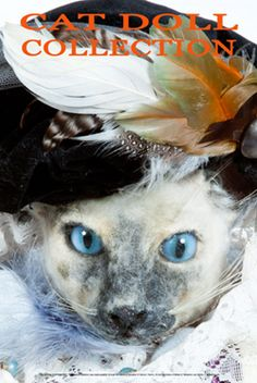 The Cat Fanciers' Association Foundation, Inc. (CFA Foundation)