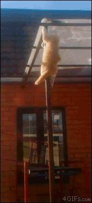 Feuerwehr-Katze