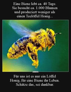 Eine Biene lebt ca. 40 Tage. Sie besucht ca. 1.000 Blumen.. Quotes To Live By, Life Quotes, Love Bears All Things, Beautiful Creatures, Good To Know, Animals And Pets, Most Beautiful Pictures, Fun Facts, Real Life
