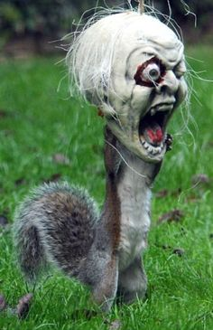The Zombie Squirrel attack is upon us.