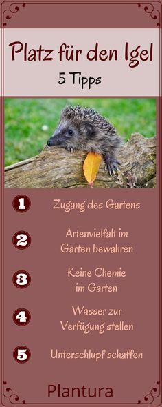 Mit diesen Tipps gestaltet Ihr Euren Garten igelfreundlich und helft den süßen Tieren! Mehr dazu findet Ihr auf Plantura!