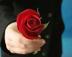The perfect Love Rose ForYou Animated GIF for your conversation. Discover and Share the best GIFs on Tenor. Cute Good Morning Images, Love You Gif, Amazing Gifs, Love Rose, Love Signs, Flower Power, Red Roses, Animation, Flowers