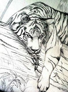 Realistic Animal Drawings, Pencil Drawings Of Animals, Animal Sketches, Cool Art Drawings, Art Drawings Sketches, Easy Drawings, Tiger Sketch, Tiger Drawing, Tiger Art