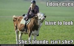Funny Animal Memes and GIFs that are pure comedy gold. Funny Animal Memes, Funny Animals, Cute Animals, Funny Memes, Hilarious, Farm Animals, Blonde Humor, Blonde Jokes, Farm Jokes