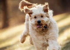 Happy dog - http://www.1pic4u.com/blog/2014/09/06/happy-dog/