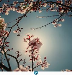 { spring } by CERO .