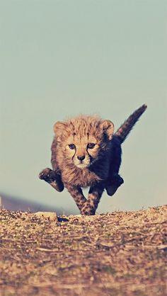 #Wild #Cat Running Wild Cat