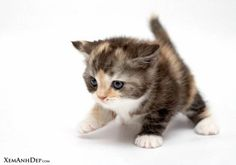 Show Pictures of Cute Cats