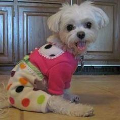 Artfire Dog Pajamas for Small Dogs Pink Polka Dot for Yorkies Maltese | Littledogfashion - Pets on ArtFire