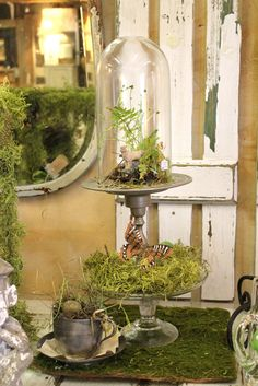 Terrariums are making a comeback and couples are embracing this bit of the Romantic age to create their wedding day vision. Be it an Alice in Wonderland theme or an enchanted forest theme, terrariu...