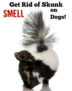This is the foolproof method to bet rid of skunk smell on dogs. Waaaaay less messy than tomato juice too!
