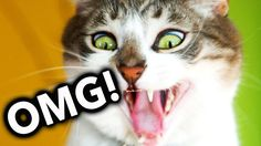 News Videos & more -  Watch the Funniest Videos on youtube - OMG! Cats on Youtube / Funny Cats - New Funny Cats Video - Funny Animals - Funny Videos #Funny #videos on #youtube #Music #Videos #News Check more at http://rockstarseo.ca/watch-the-funniest-videos-on-youtube-omg-cats-on-youtube-funny-cats-new-funny-cats-video-funny-animals-funny-videos-funny-videos-on-youtube/