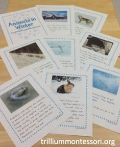 A simple non-fiction printable book to introduce what animals do in the winter (or just use as cards)
