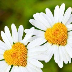 """""""Na simplicidade aprendemos que reconhecer um erro não nos diminui, mas nos engrandece, e que as pessoas não existem para nos admirar, mas para compartilhar conosco a beleza da existência."""""""