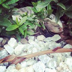 Ama la naturaleza y lo que viene en ella ;) Plants, Naturaleza, Fotografia, Photography, Plant, Planets