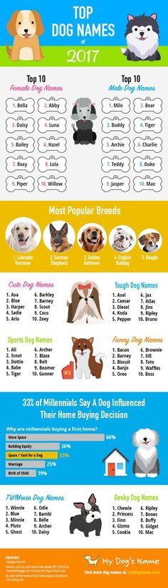 Dog Infographic: Top Dog Names of 2017 Dog Facts & Tips for owners -- Repin to your own inspiration board