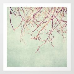Chinese Spring Art Print by Katayoon Photography - $19.76