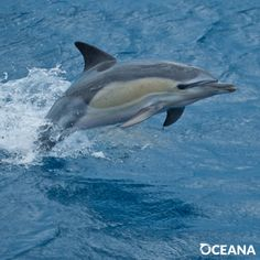 URGENT: Dolphins At Risk Of Death In Drift Gillnets  Add your name to save dolphins from needlessly dying in indiscriminate fishing gear.