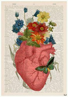 Tutti dicono che il cervello sia l'organo più complesso del corpo umano, da medico potrei anche acconsentire. Ma come donna vi assicuro che non vi è niente di più complesso del cuore, ancora …