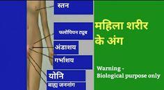 Female body parts name in hindi, महिला शरीर के बारे मे जानकारी, महिला शरीर के अंग, औरत क्या है !