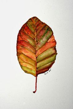 Watercolor sketch of leaf