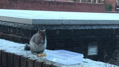 Squirrel loving the walnuts that I put out. What a wee cutie. Cat Gif, Squirrel, Pets, Videos, Animals, Animales, Animaux, Squirrels, Animal