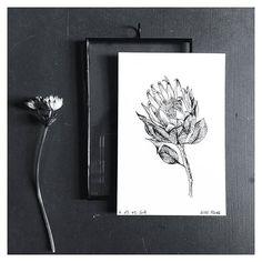 https://www.etsy.com/fr/shop/monocotyledone King Protea, comme je l'aime.  #flowers #illustration #dessin #herbier #monocotyledoneleshop #bordeaux #draw #sketching #floralillustration #botanicalillustration #etsy #etsyfr #etsyfrance #etsysuccess #bonaticalart #protea #kingprotea