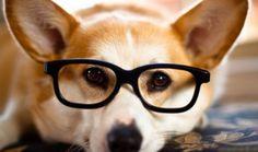 Komik ve akıllı hayvanlar