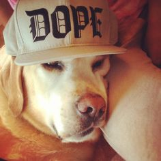 Dope Funny Dog Photos, Funny Dogs, 12 Year Old, Animals And Pets, Fur Babies, Puppies, Wallpaper, Pets, Funny Dog Pictures