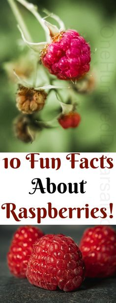10 Fun Facts About Raspberries! - One Hundred Dollars a Month Growing Raspberries, Raspberry Canes, Raspberry Leaf Tea, Organic Gardening, Gardening Tips, Facts About Plants, Stages Of Labor, Berry Picking