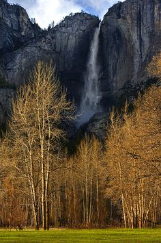 Yosemite valley trees with golden sunset such wonderful trees throughout this national park!