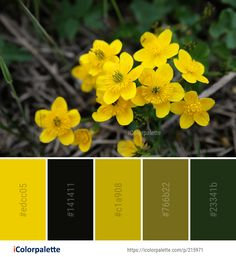 Color Palette Ideas from Flower Yellow Flora Image