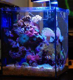 Saltwater Tank, Saltwater Aquarium, Aquarium Fish Tank, Nano Reef Tank, Reef Tanks, Biorb Fish Tank, Reef Aquascaping, Coral Reef Aquarium, Marine Tank