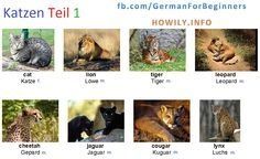 German For Beginners: Cats 1