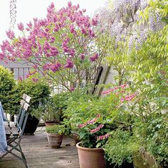 Hydrangea, Planters, Terrace, Hydrangea Tree, Plants, Pot Holders, Pots, Hydrangea Macrophylla, Container Plants