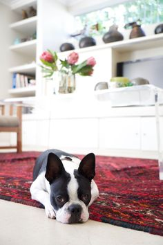 C'mon, Cat People! Listen Up, Dog Lovers! Clean-Up Hacks You Need to Know