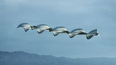 Unusual Composite Images of Birds in Flight Inspired by an 150-Year-Old Technique   Colossal