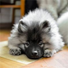 all of the fluff