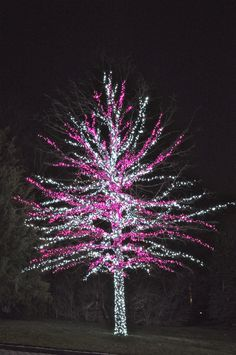 Beautiful tree wrapped with mini LED holiday lights!