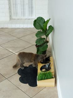 Carefully handcrafted elevated feeders to bring a more modern feel to your home. Designed for maximum comfort when eating/drinking at a tilted 15 degrees. Also keeps food centered to prevent food being scattered all over the bowl or out of the bowl. Comes 2 cute ceramic kitty bowls and a ceramic tray to grow wheat grass to promote healthy eating. Shop now at www.vivipet.com