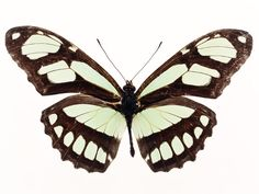 10437-a-yellow-butterfly-isolated-on-a-white-background-pv.jpg (640×480)
