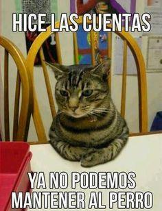 Perro  #gracioso #toquedehumor