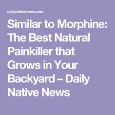 Similar to Morphine: The Best Natural Painkiller that Grows in Your Backyard – Daily Native News