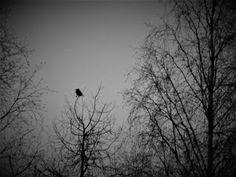 Satu Ylävaara Portfolio: 2016 Rocky Horror, Helsinki, 50 Shades, Yule, Black And White Photography, Steampunk, Celestial, Artwork, Blog