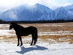 'Αλογο στην κορυφή του βουνού. #Haines #Junction YT #Canada #Horse #mountain #picoftheday #NatGeoChannelGR #NGC
