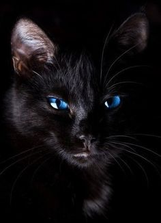 This is StormChaser he is very superstitious. More - Katzen - Gatos Pretty Cats, Beautiful Cats, Animals Beautiful, Pretty Kitty, Gorgeous Eyes, Amazing Eyes, Animals Amazing, Amazing Art, I Love Cats