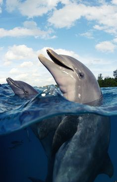 INDIAN RIVER LAGOON-DOLPHIN