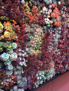 living wall.. these things are the bomb