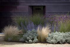 The best gardens in Southern California are those that are water savvy. Ornamental grasses & lavender