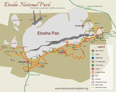 Namibia Rundreise Safari im Etosha Nationalpark
